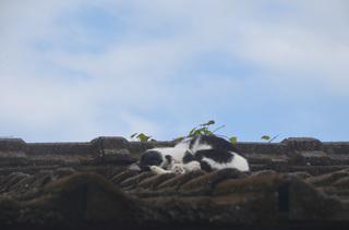 1127屋根の上の猫03.jpg