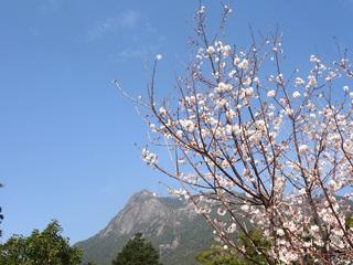 1223桜とモッチョム01679.jpg