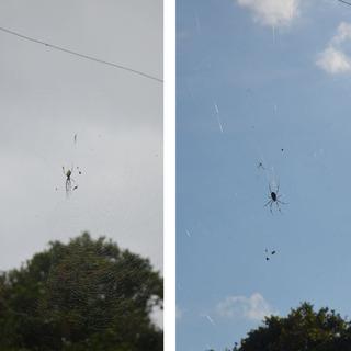 1227蜘蛛の巣.jpg