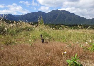 1231花ちゃんと草原.jpg