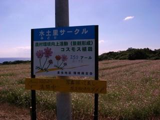 コスモス案内板.JPG