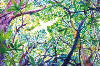 森の鳥風DSC_1544_72.jpg